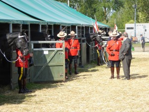 HMQ90 stabling for canadian Mounties post flooding with chipping and straw
