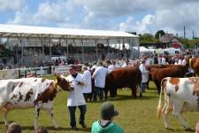 Grandstand view of Livestock Parade
