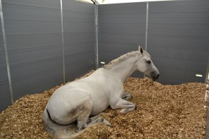 Relaxed Barn Stables guest.